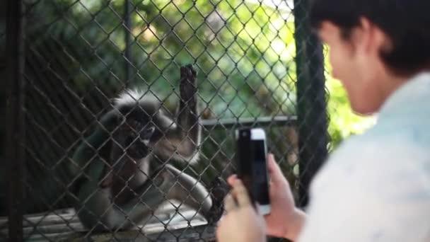 Člověk je fotografování s smartphone malé roztomilé stravovací opice v zoo. 1920 × 1080