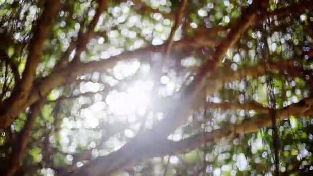Paprsky slunce svítí skrz stromy, přírodní pozadí. 1920 × 1080