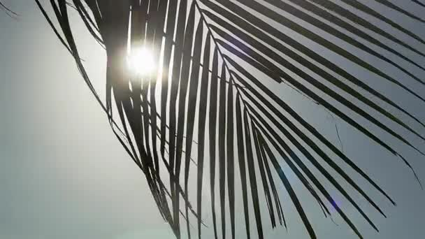 Palm tree on blue sky background moving on wind through the sun with lens flare effects. slow motion. 1920x1080