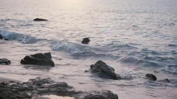 Funny pes plave v moři hraje na vlnách. Zpomalený pohyb. 1920 × 1080
