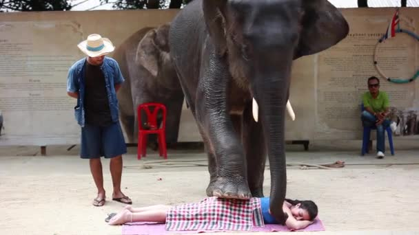 Thailand, Koh Samui, 9 february 2016  Performance of elephants on the  elephant show  Elephants perform various tricks for spectators  The animal  makes a massage to the person with the foot  1920x1080