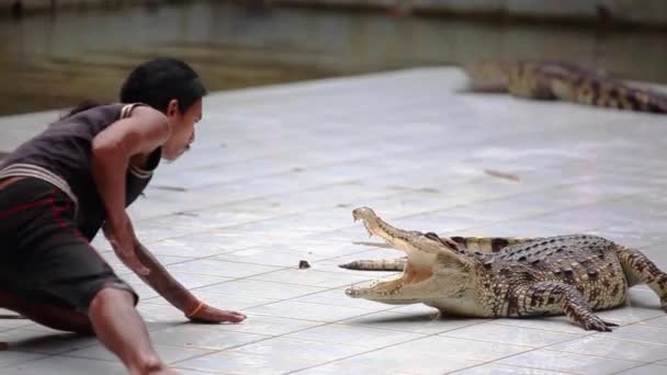 Thailand, Koh Samui, 9 february 2016. Crocodile show at Crocodile Farm. Extreme trick with dangerous animals. Man puts his hand in the mouth of the crocodile. 1920x1080