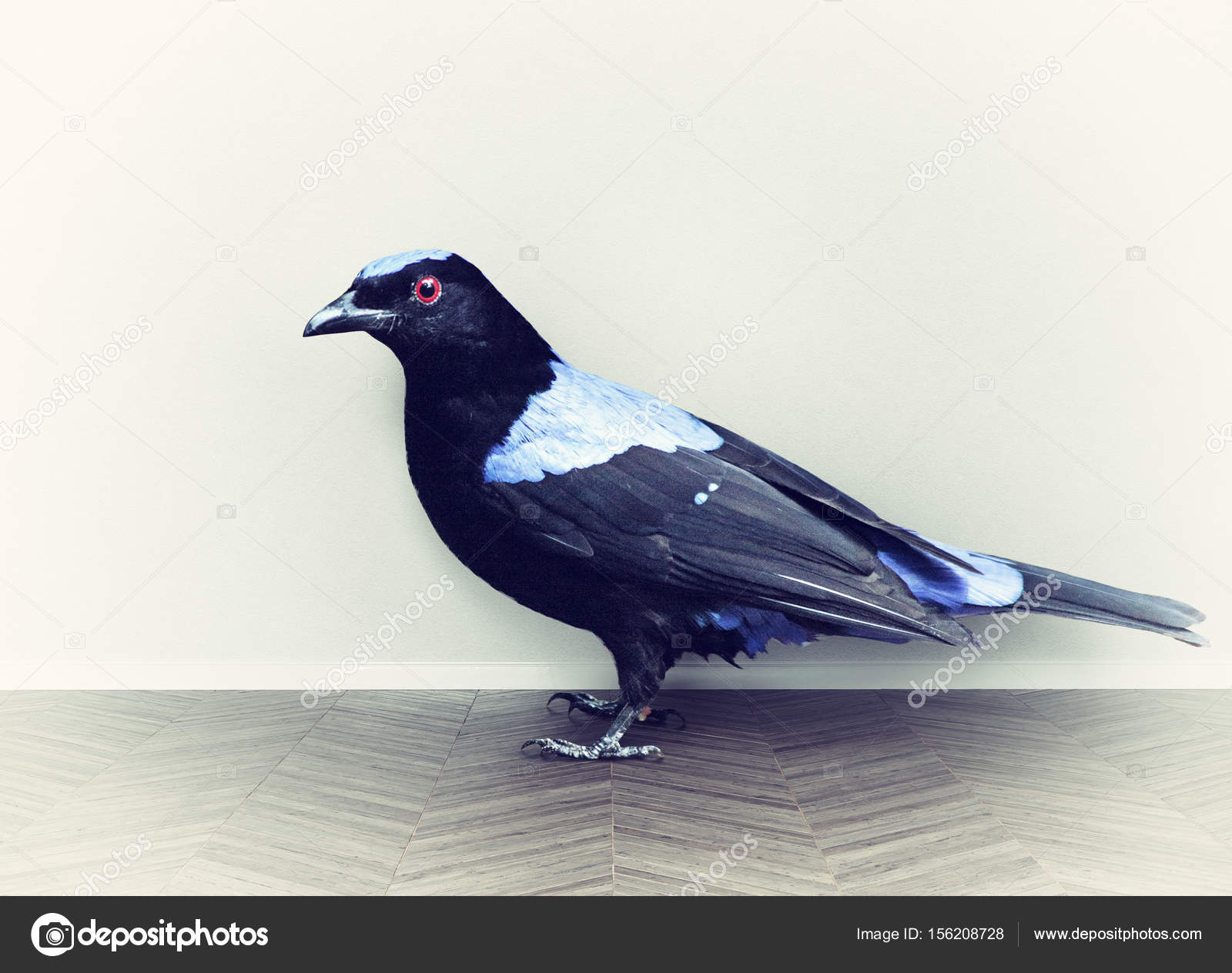 Φωτογραφίες από τεράστιο πουλί καλύτερος Έφηβος/η pron