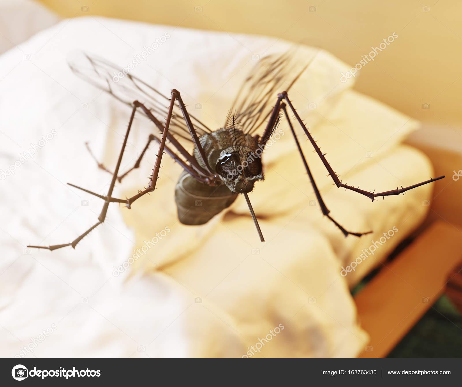 vliegende muggen in slaapkamer stockfoto