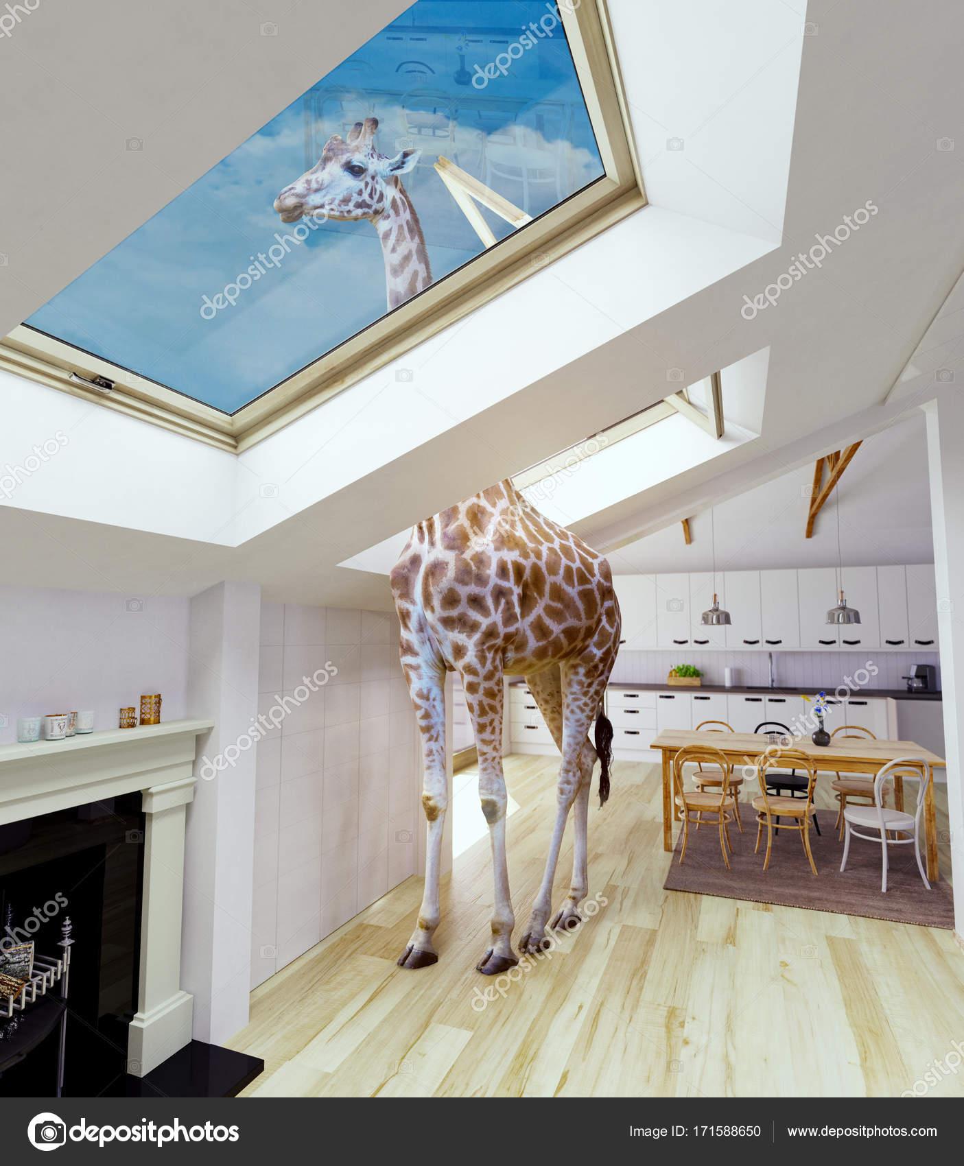 Giraffe in the attic window — Stock © vicnt2815