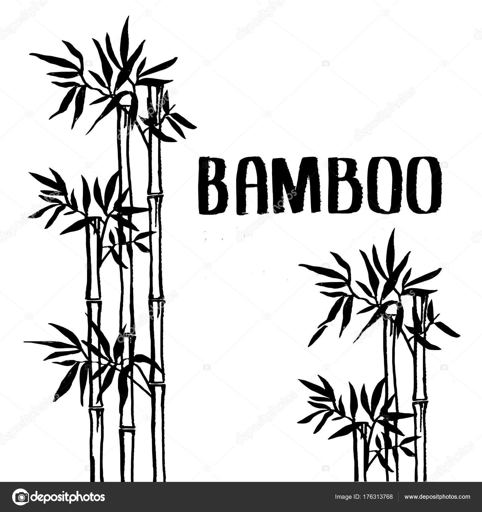 Bambus Busch Stockvektor C Ritamuzzy 176313768