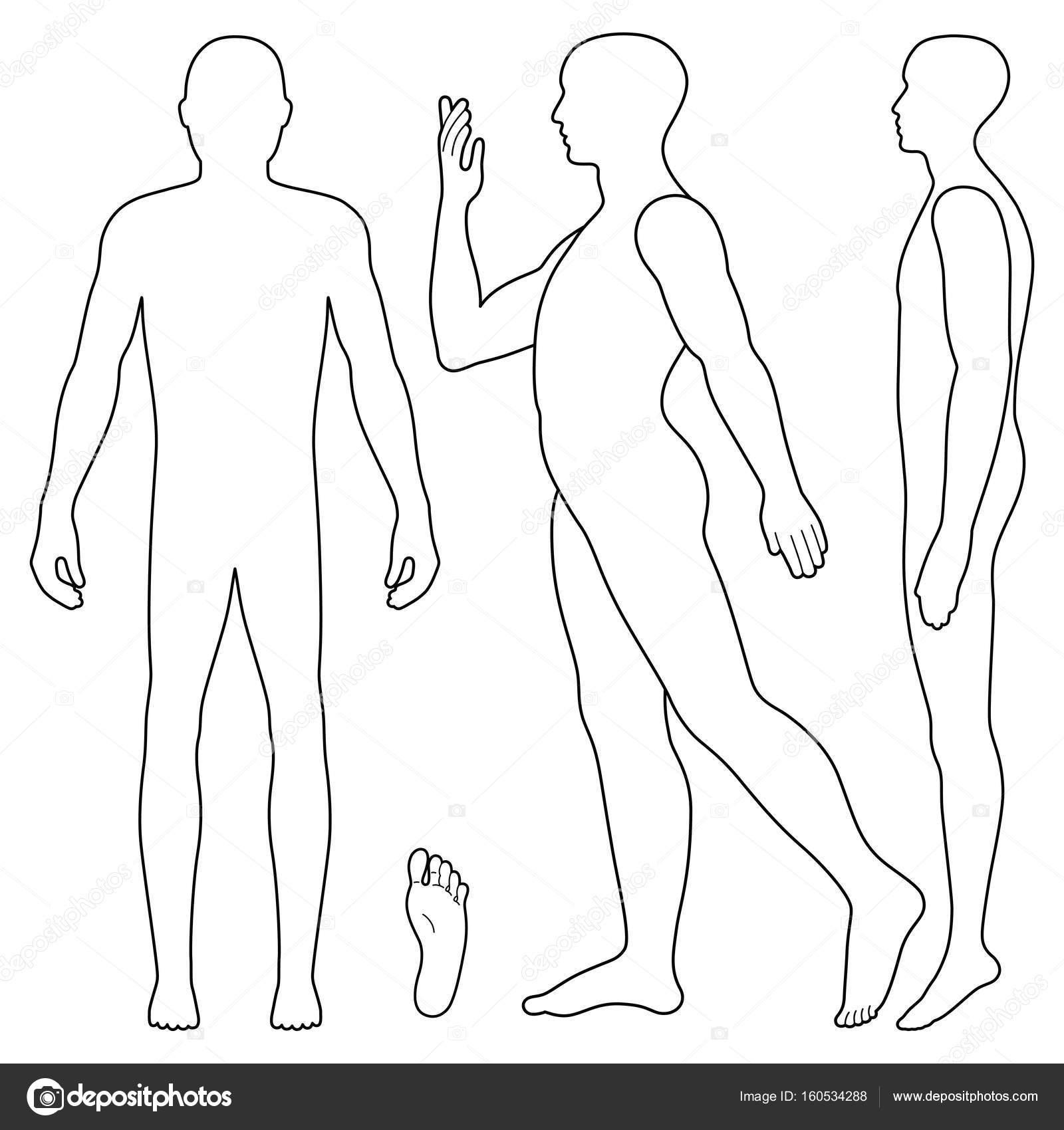 Figura Cuerpo Humano Para Colorear Figura De Hombre De