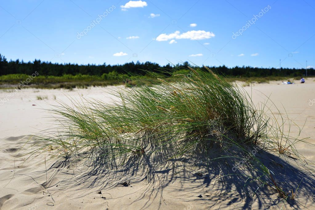dunes with green grass