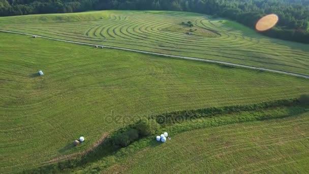 grüne Wiesen Luftaufnahme