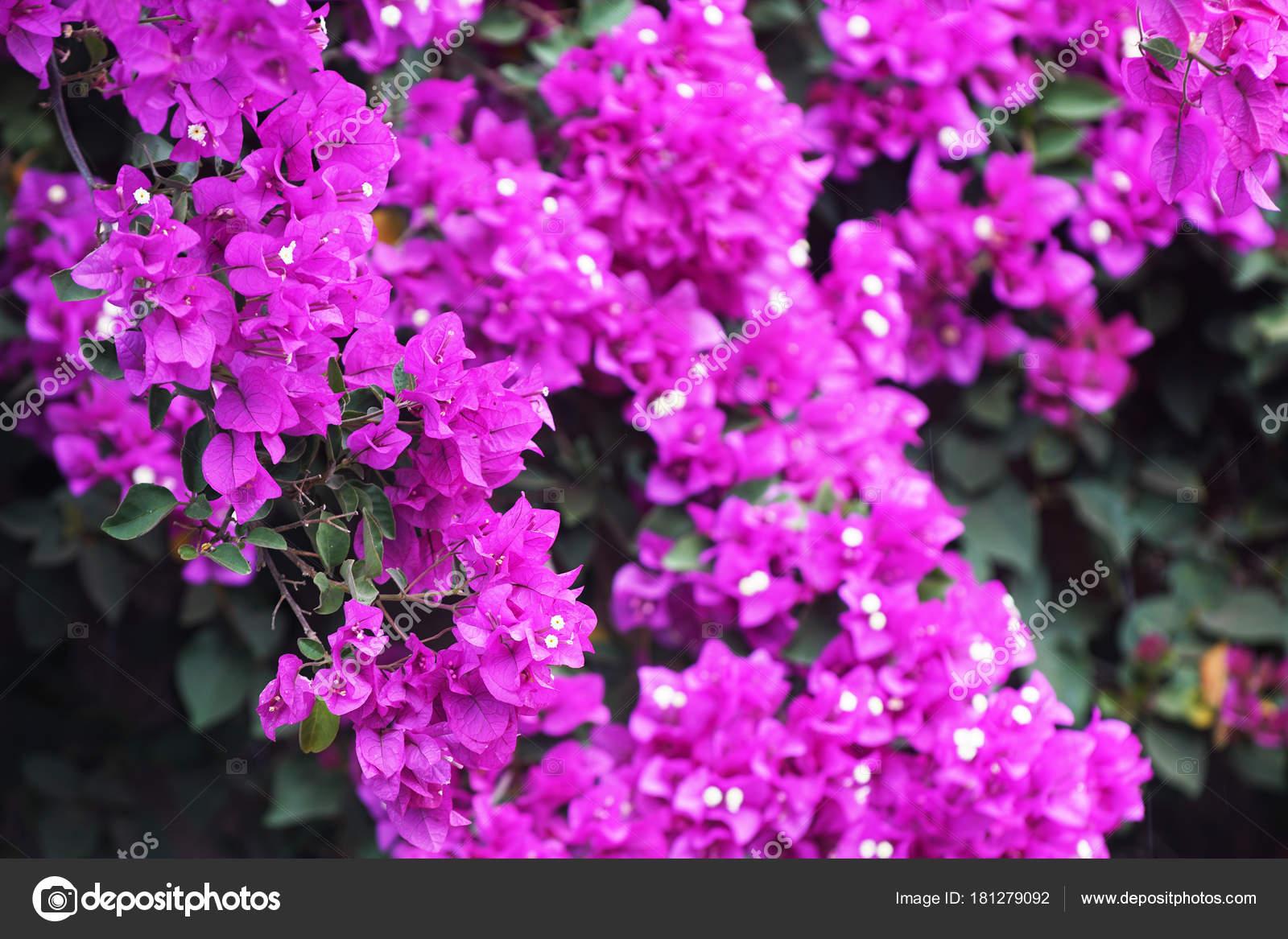 Close View Flowering Tropical Plants Park Stock Photo Taden1