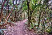 Cesta do magického lesa ve slunečný den
