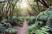 Fotografie Cesta do magického lesa ve slunečný den