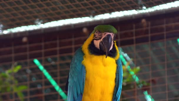 Ara parrotclose nahoru
