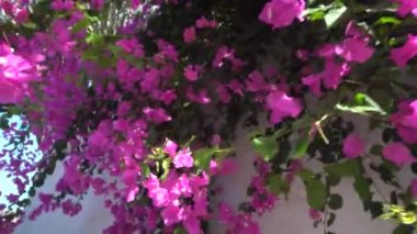 piros trópusi virágok