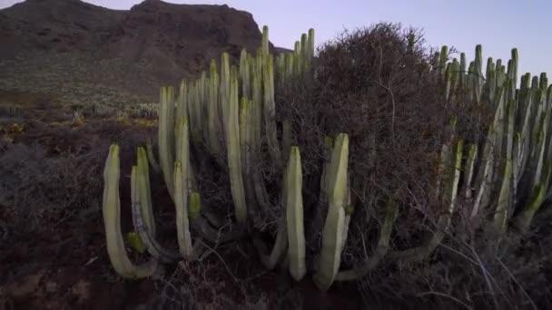 Pole kaktus v poušti