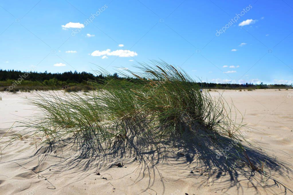 blue sky over dunes with desert plants