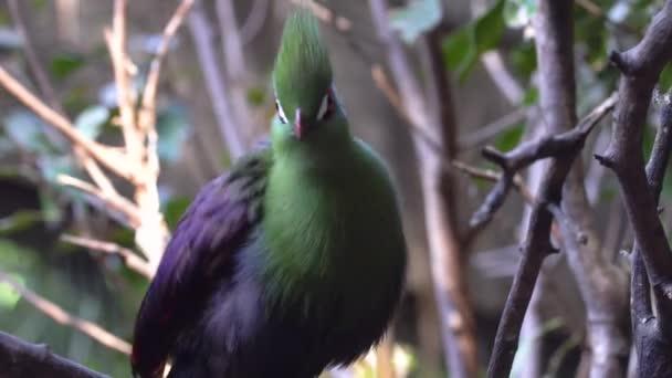 barevný pták v zoo