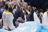 pingvinek csoportja az állatkertben.