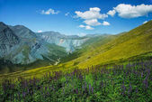 Fotografie Altai, Russia, mountains and river, panorama, wild landscape, Belukha view, green valley, beautiful nature