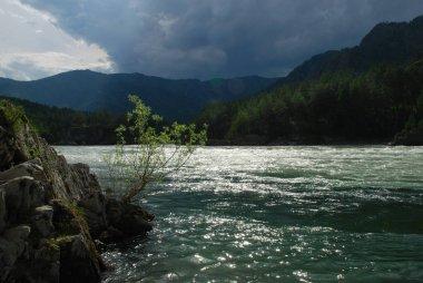 Altai, Russia, mountain river Katun, panorama, forest, wild landscape, beautiful nature