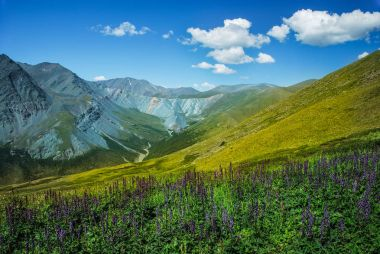 Altai, Russia, mountains and river, panorama, wild landscape, Belukha view, green valley, beautiful nature