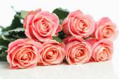 svazek růžových růží, bílé pozadí