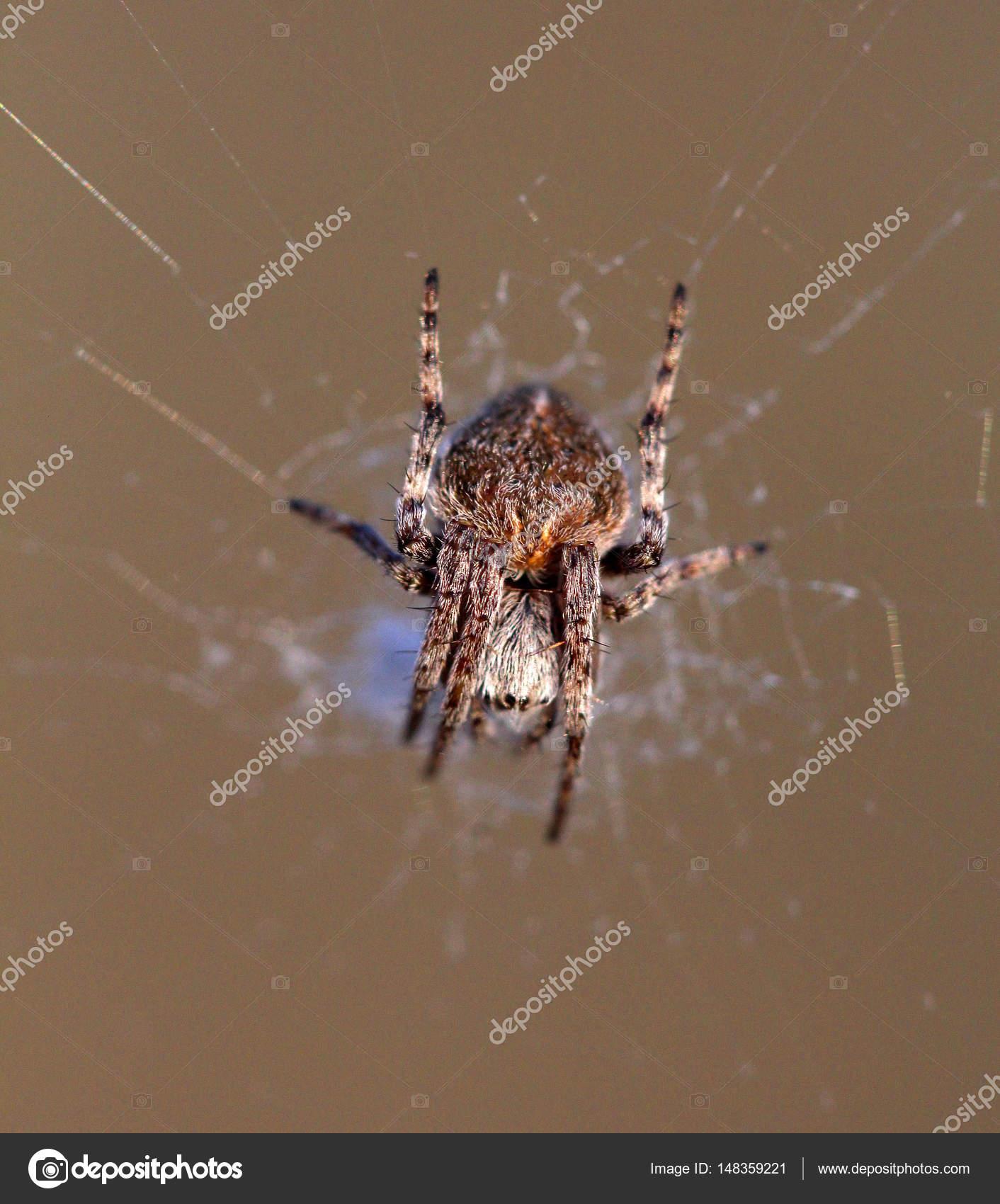 brown spider close up — Stock Photo © nehruresen #148359221
