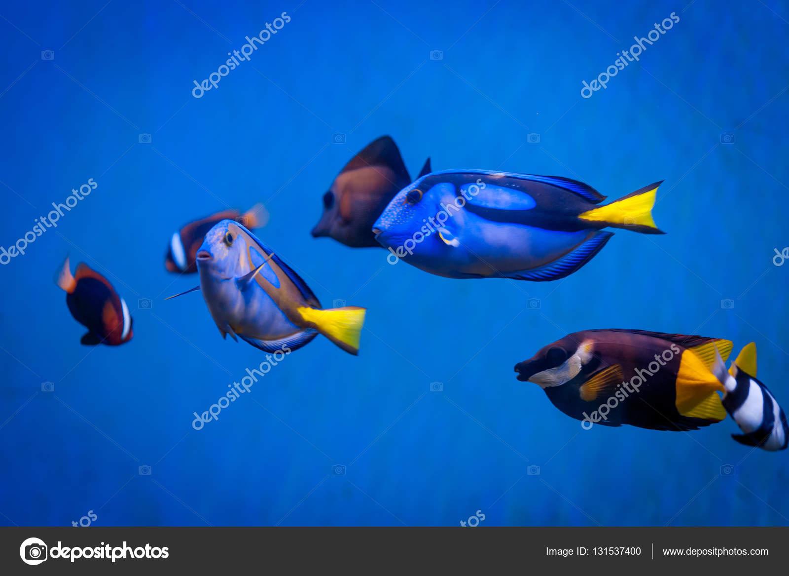 Mar tropical submarino con los arrecifes de coral y peces. hermosa ...