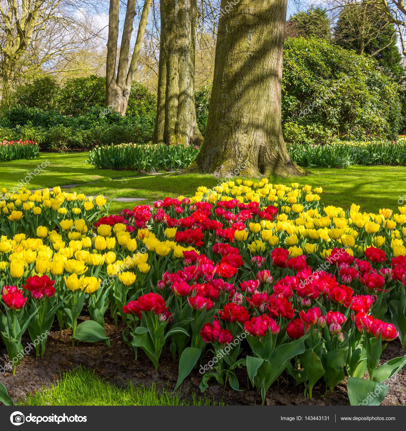 Feder Natur Hintergrund. Schöner Garten U2014 Foto Von Ewastudio