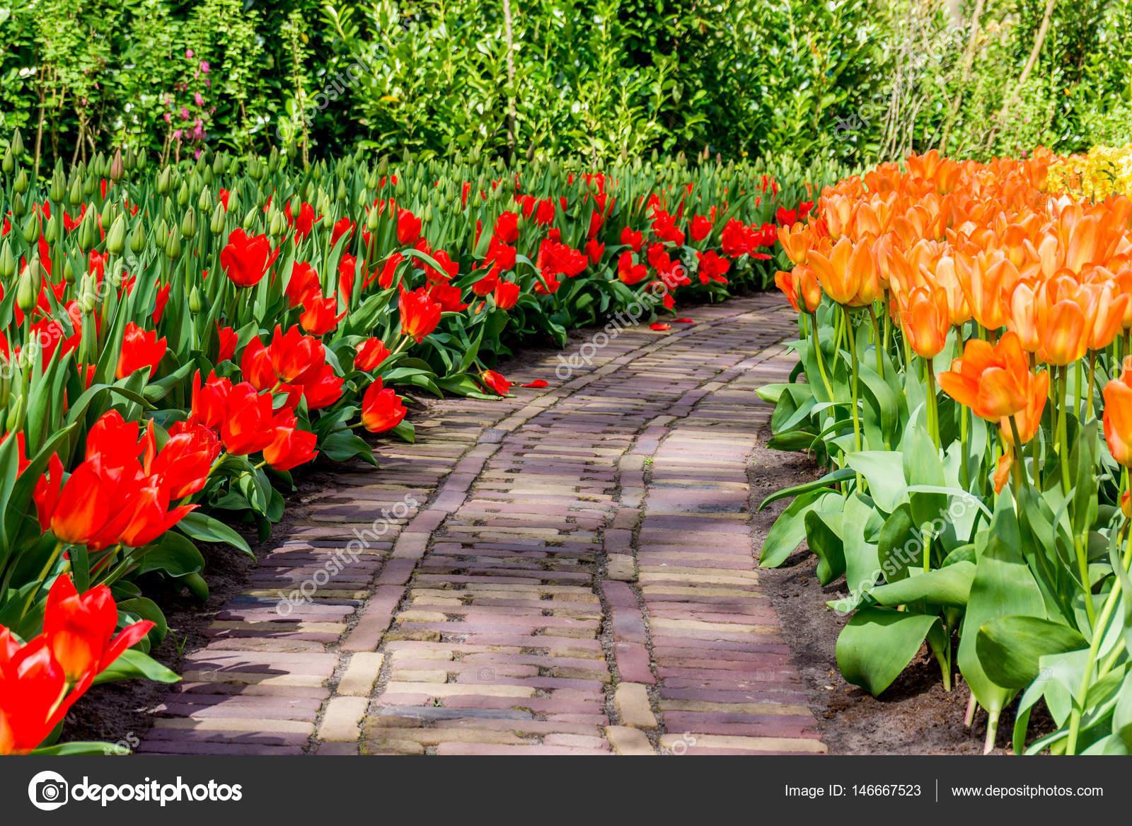 Schöner Park Garten Im Frühjahr. Schöne Gartenblumen U2014 Foto Von ...