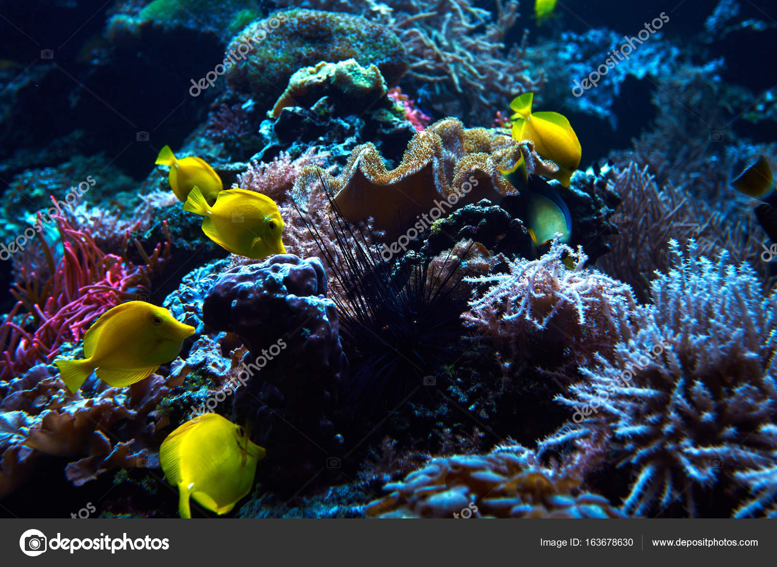 Underwater Coral Reef Landscape Garden With Tropical Fish Stock Photo