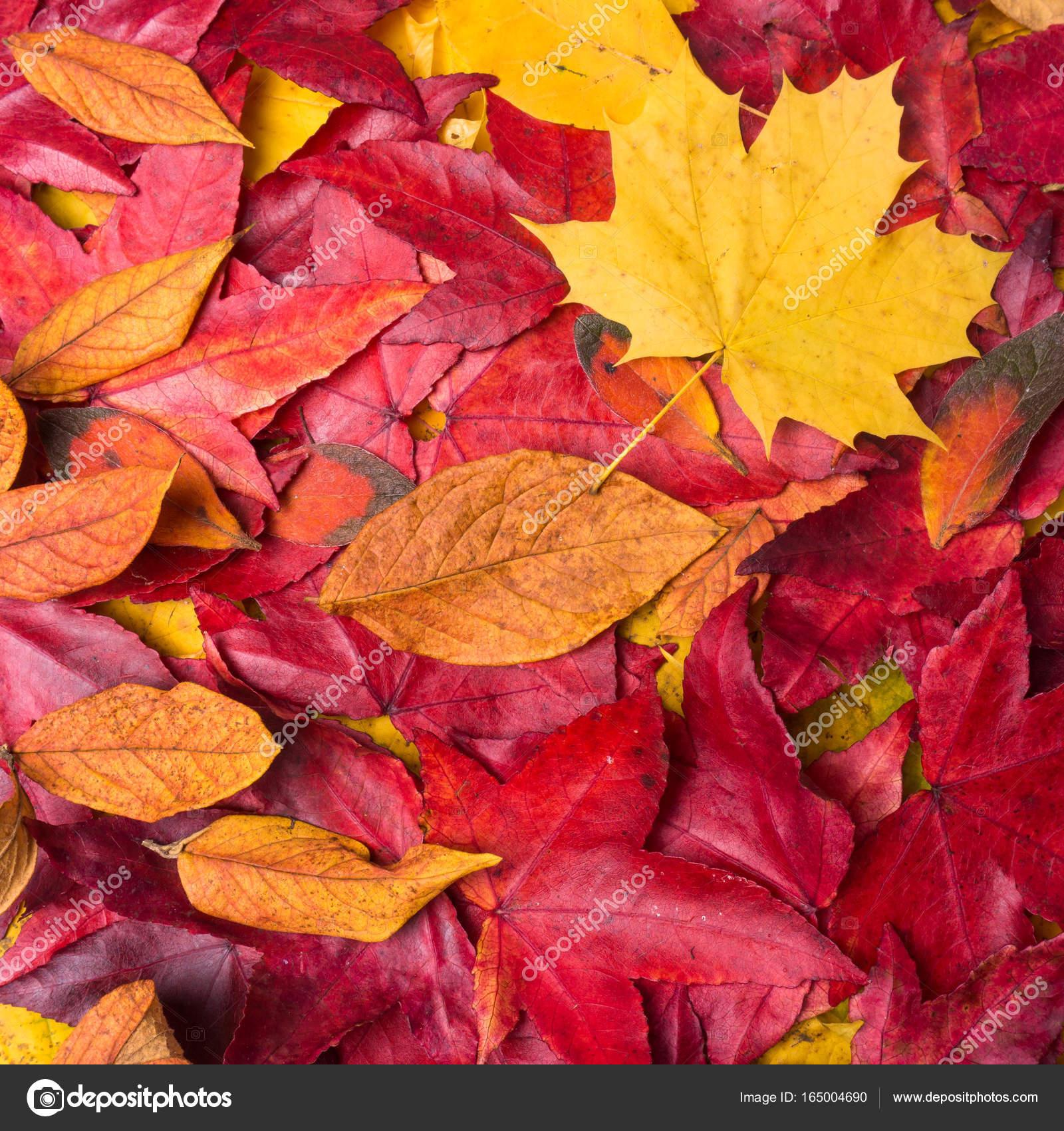 Herbst Blatter Hintergrund Bunte Blatter Im Herbst Stockfoto
