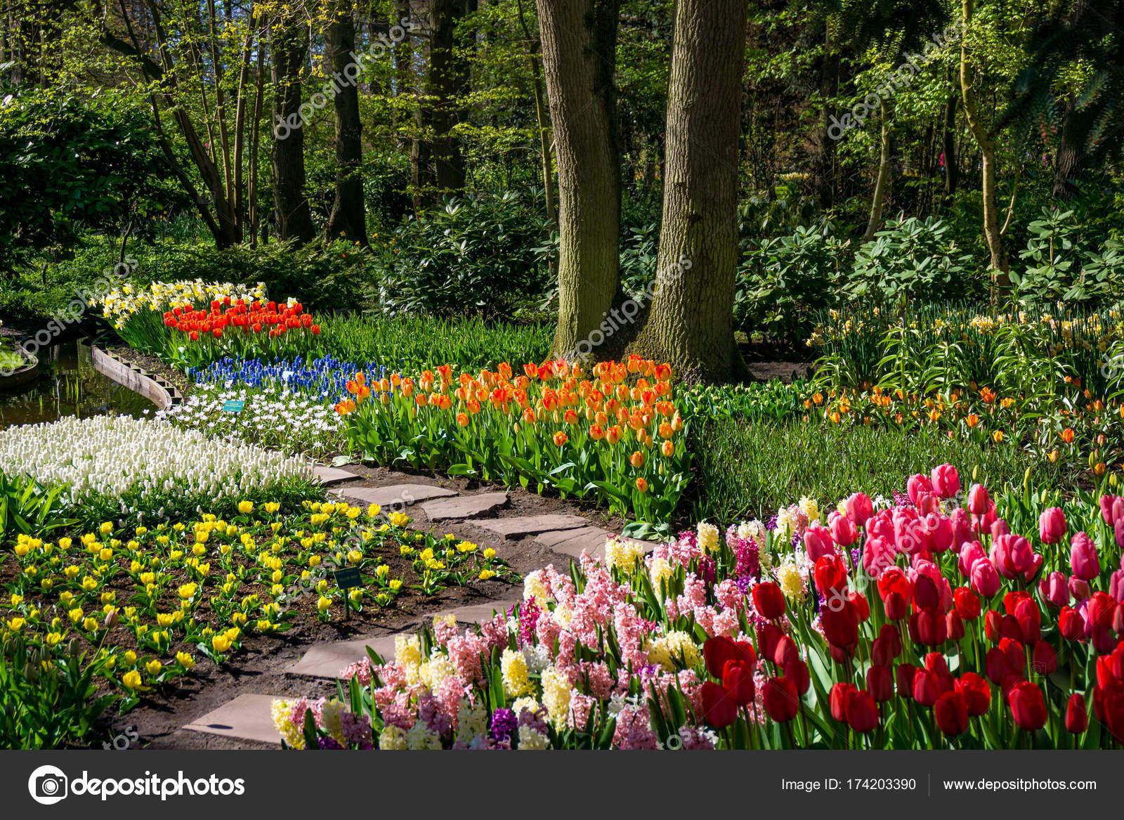 Schöner Garten Mit Bunten Blumen U2014 Foto Von Ewastudio