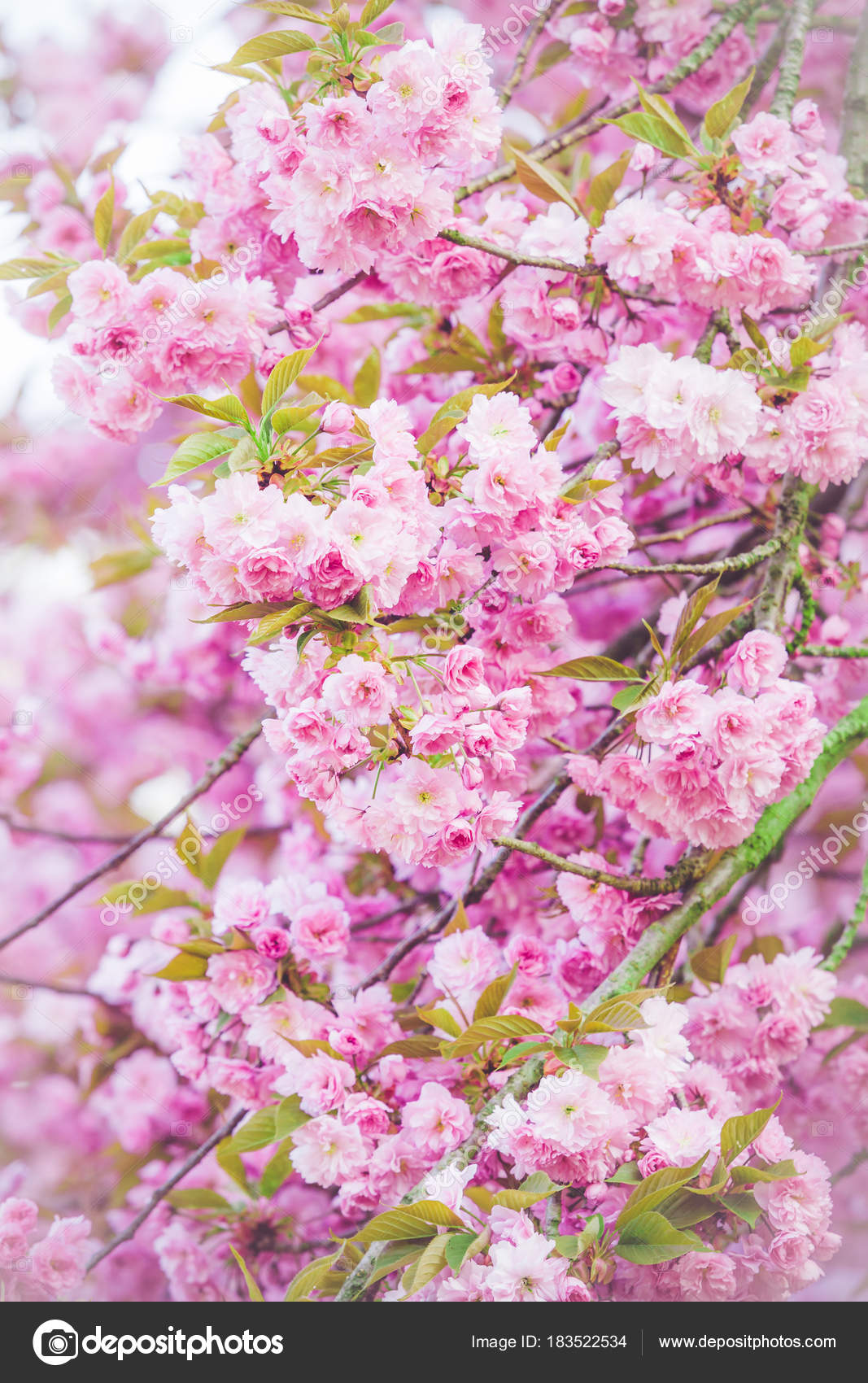 Beautiful Nature Scene With Blooming Tree Spring Flowers Sprin