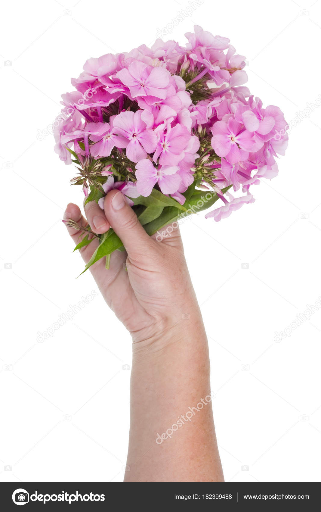 Woman holding a bouquet of summer pink flowers in her hand stock woman holding a bouquet of summer pink flowers in her hand stock photo izmirmasajfo