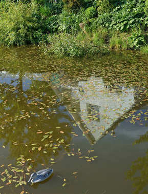 The surface of the village pond was overgrown with algae. Visibl