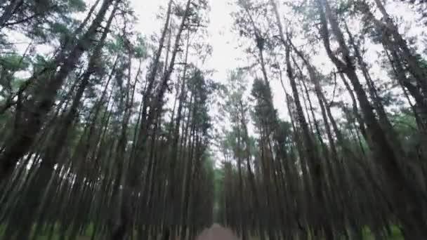 Borovice vrcholky stromů ubírá vysázených lesů den čas, léto