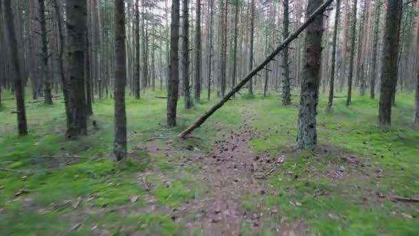 POV chůzi na chodník v borového lesa v létě, zelené trávy a mechu
