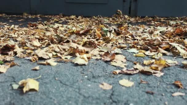 Nohy běží na podzimní listí v garážích alej, propagační letáky spadnout na zem