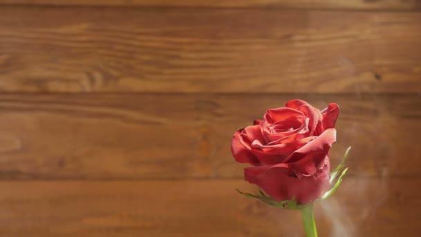 Háttér: piros rózsa, a füst a fa háttér.
