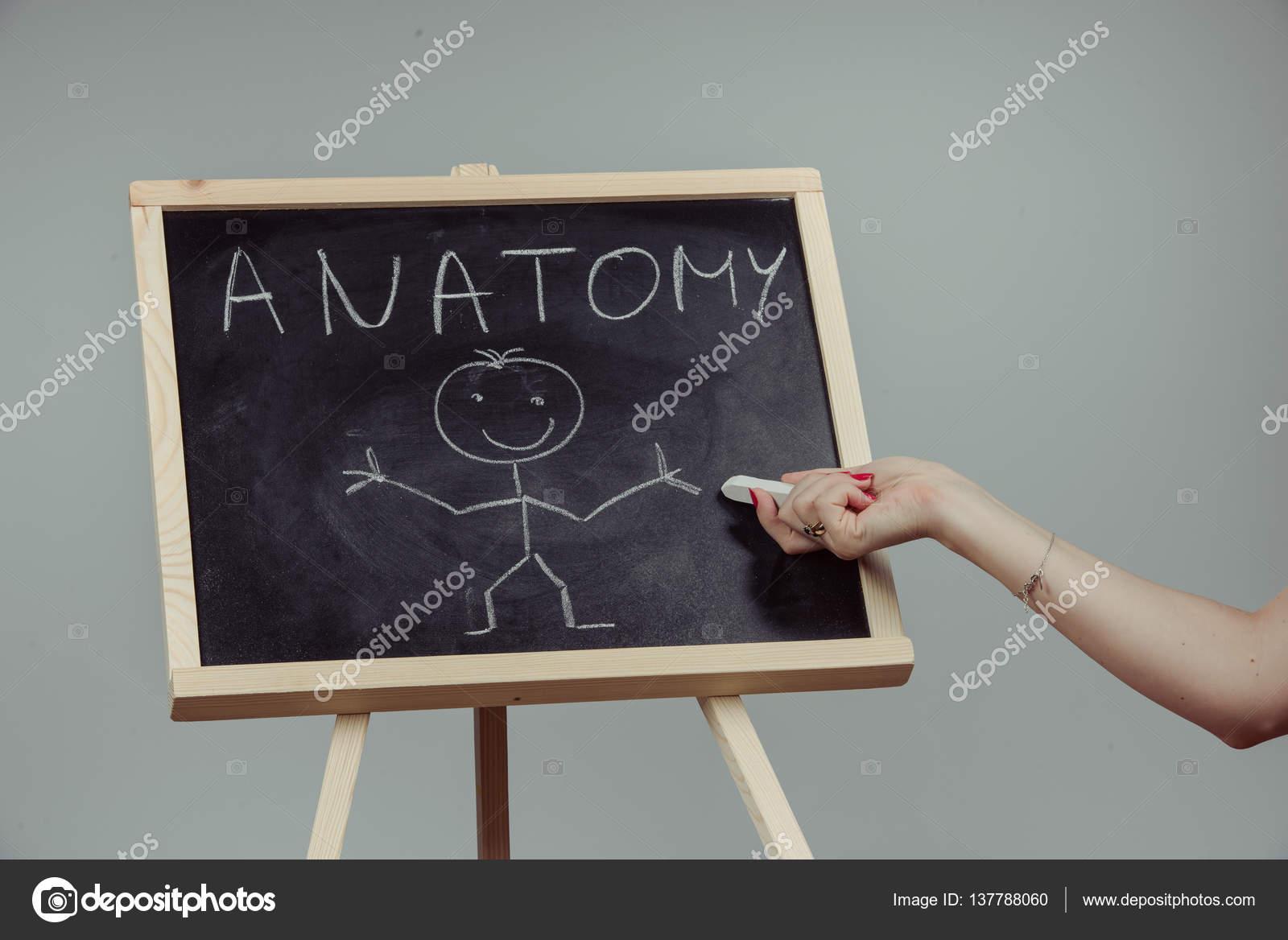 Palabra de anatomía escrito en pizarra — Fotos de Stock © masterwilu ...