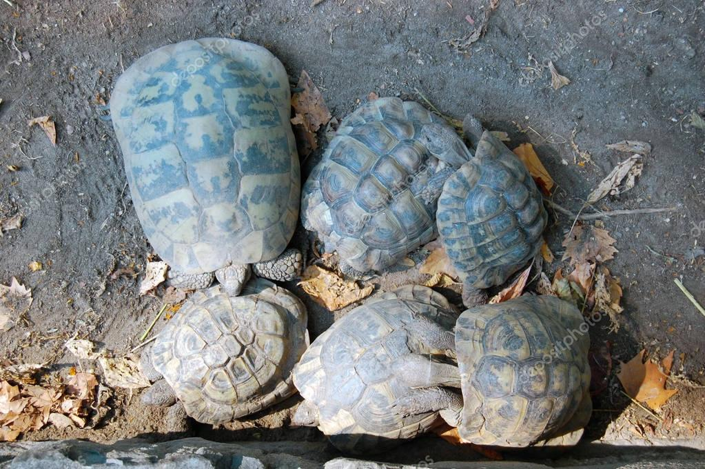 turtles in the Budapest Zoo