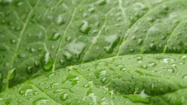 kapky deště na zelený list