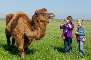 Toursits making shootings animal camel in Askania Nova