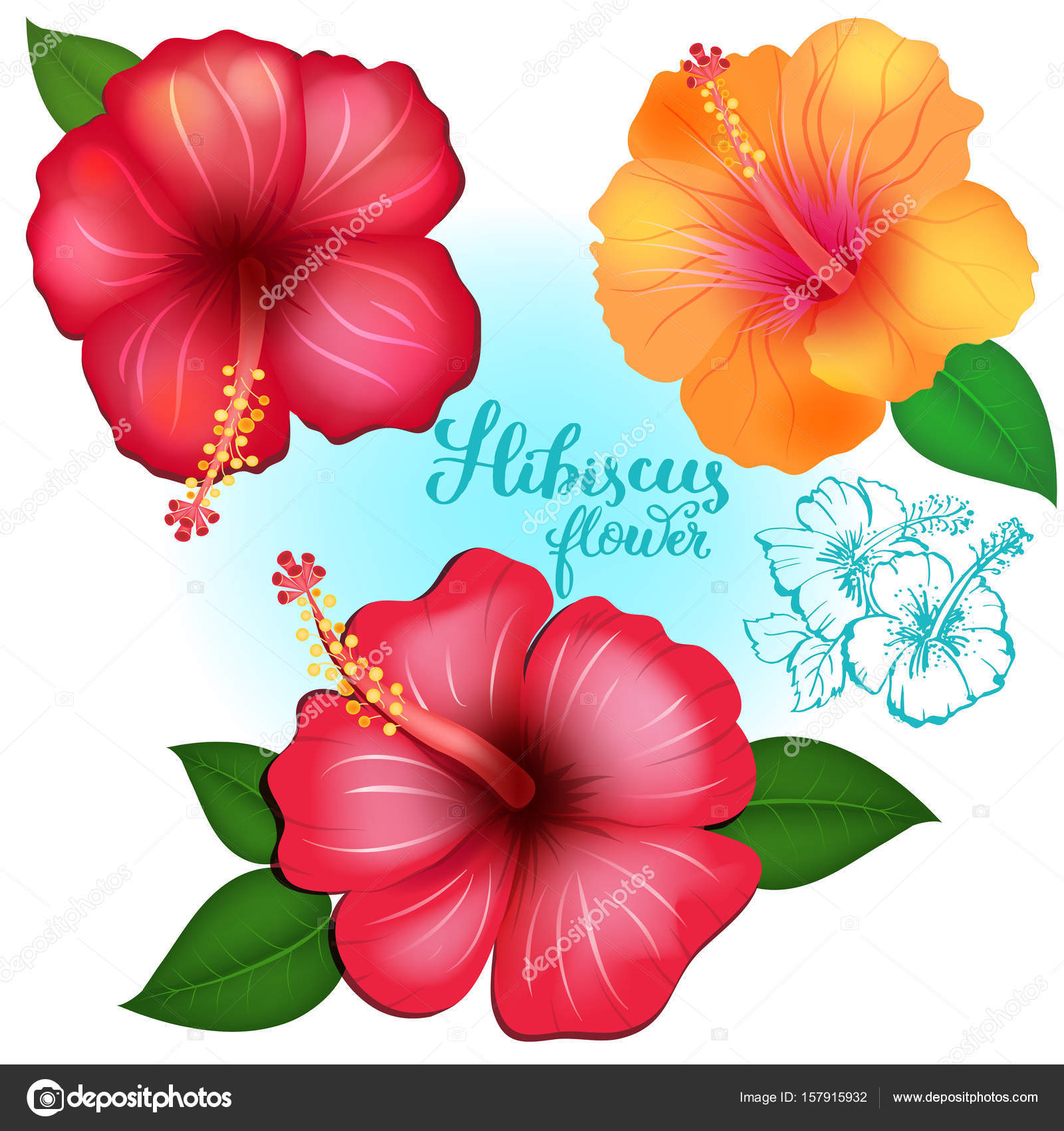 Colored exotic flowers Hibiscus — Stock Vector © Ola-Ola #157915932