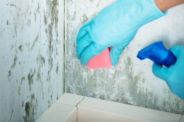 Person Cleaning Moldy Wall