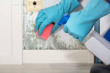 Hands Cleaning Moldy Wall