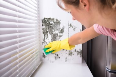 Close-up Of Woman Cleaning Mold From Wall Using Spray Bottle And Sponge