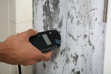 Close-up Of A Person's Hand Measuring Wetness Of Moldy Wall