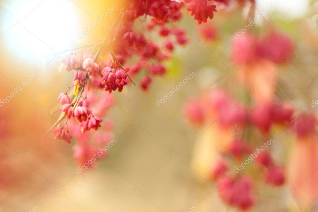 Bittersweet berries background